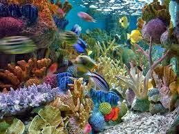 Wallpaper Pemandangan Bawah Laut Jdsk