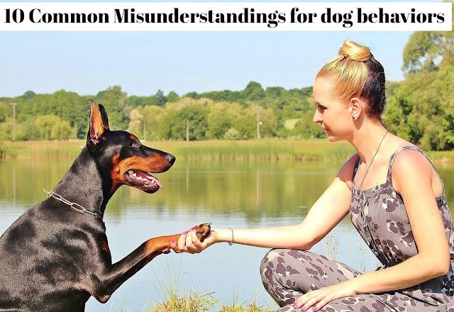 10-Common- Misunderstandings-for-dog-behaviors