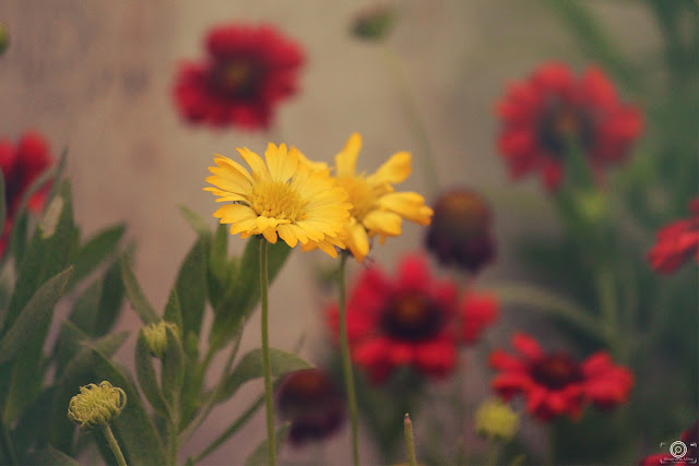 flower image, spring photos, shashank mittal, shashank mittal photography