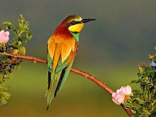 Resultado de imagem para pássaro