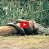 Most Amazing Wild Animal Attacks, Animal WildLife lion, tiger, anaconda, deer, Crocodile, Rhino