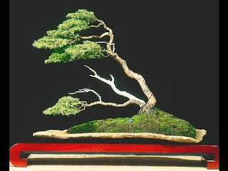Windswept Bonsai style (Fukinagashi)