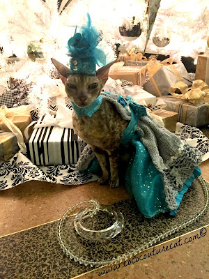 Coco the Cornish Rex under Christmas Tree  NYC