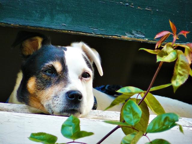 Espera 6 años para un alquiler social y se lo deniegan por tener perro