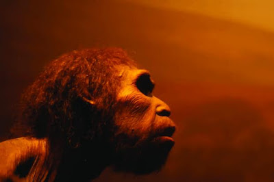 Neanderthals could have survived in Scandinavia