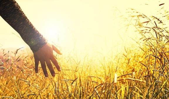 Hadis Motivasi Hidup, Kerja dan Belajar: Spirit Cinta Damai