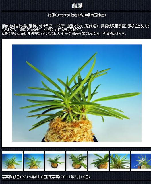 http://www.fuuran.jp/jiman_ryuuhou.html#%E9%BE%8D%E9%B3%B3%E3%81%AE%E8%A9%B3%E7%B4%B0