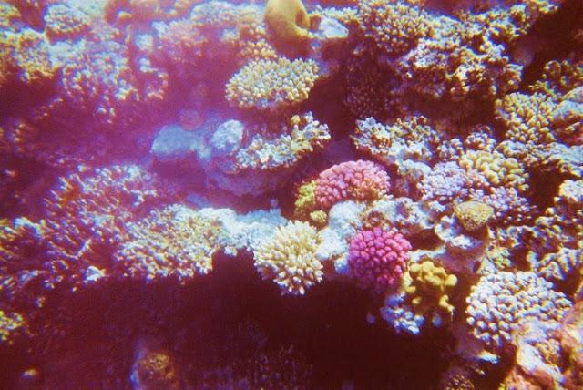 VISITAR DAHAB, um paraíso escondido no Mar Vermelho | Egipto