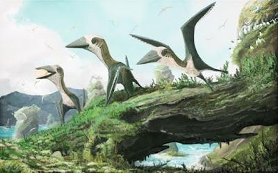 Fosil Spesies Baru Pterosaurus Kecil Ditemukan