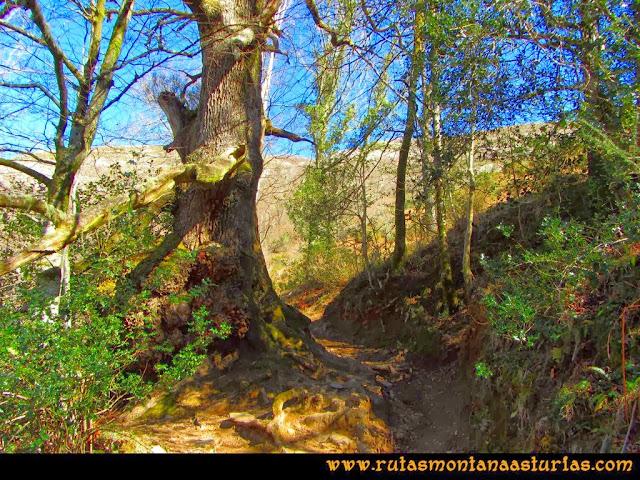 Ruta Pico Vízcares: Camino a la majada Cureñu