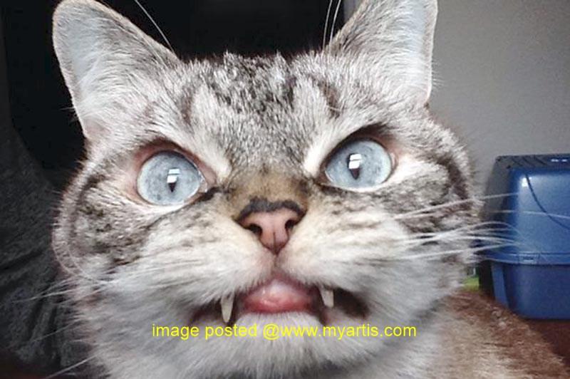 Gambar Kucing Seram godean.web.id