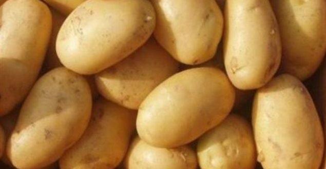 فتح باب الاكتتاب على بذار البطاطا المستوردة بالسويداء