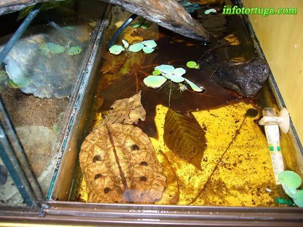 Acuario para Matamata (Chelus fimbriatus)