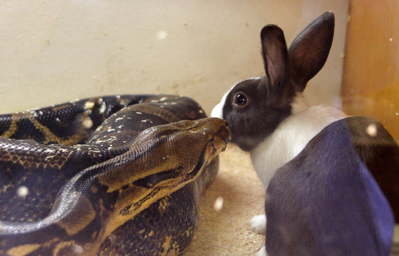 подробностей знаю, змея с ушами зайца картинка вам взглянуть фото