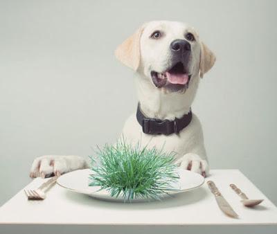 Pas jede travu Panvet
