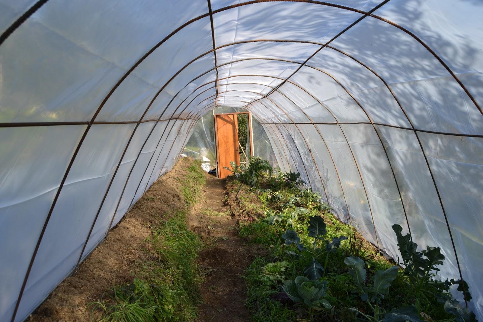 I sogni di harlock costruire una serra nel campo con poco for Archi per serre da orto