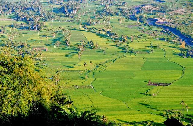 groene rijstvelden in de filipijnen, rijst, rijstvelden