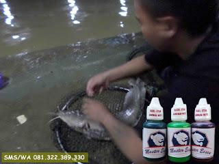 Essen Oplosan Untuk Galatama Ikan Lele