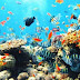 Indahnya Taman Laut Bunaken