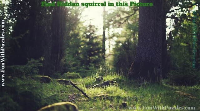 Picture Puzzle to find hidden squirrel to test your observational power