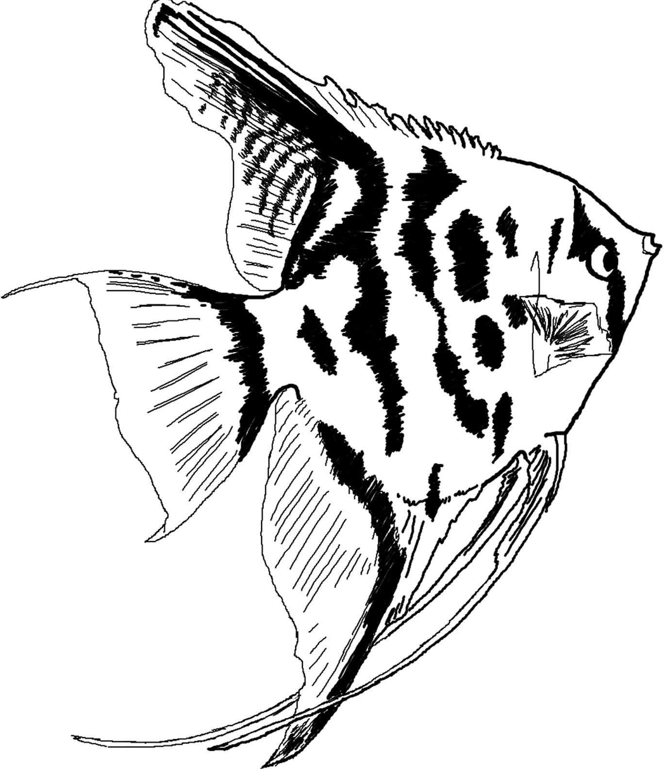 gambar mewarnai hitam putih ikan hias air tawar untuk anak
