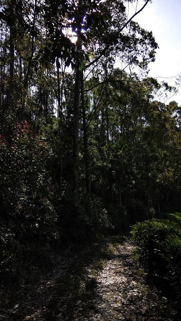 Beautiful forest trails, Kerala