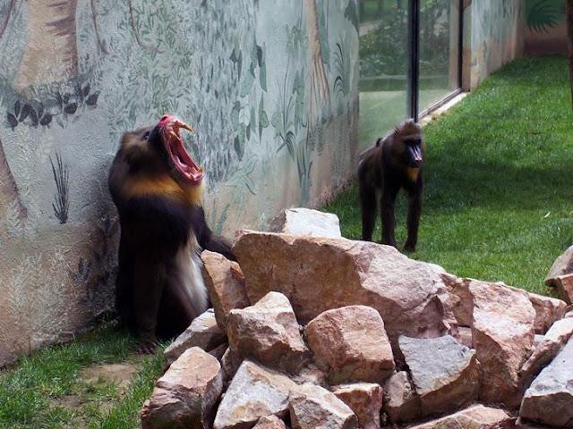 Zoológico de Córdoba, Córdoba