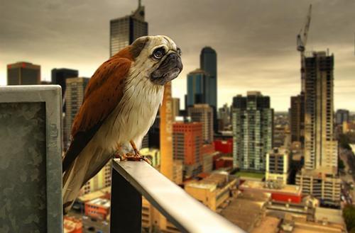 [Menggabungkan 2 Hewan] 10 Spesies Hewan Baru yang Lahir Berkat Photoshop (Part 1) + Foto