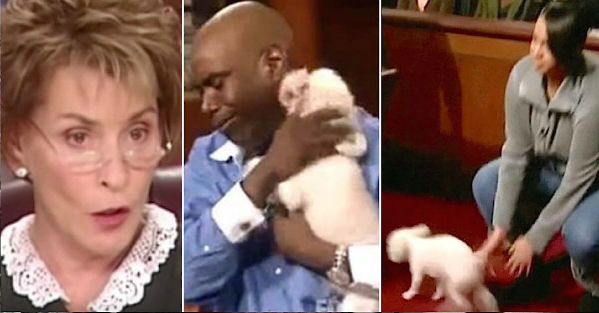 Judge Judy Allows Stolen Dog To Run Loose In Courtroom To Find His True Owner