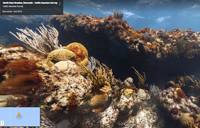 Take a Dive with Google Underwater Street View