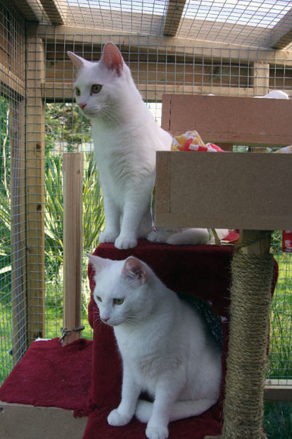 A new home for deaf cats Flash and Gordon