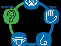 Sistem Indra Pada manusia - Biologi Kelas XI IPA SMA-MA