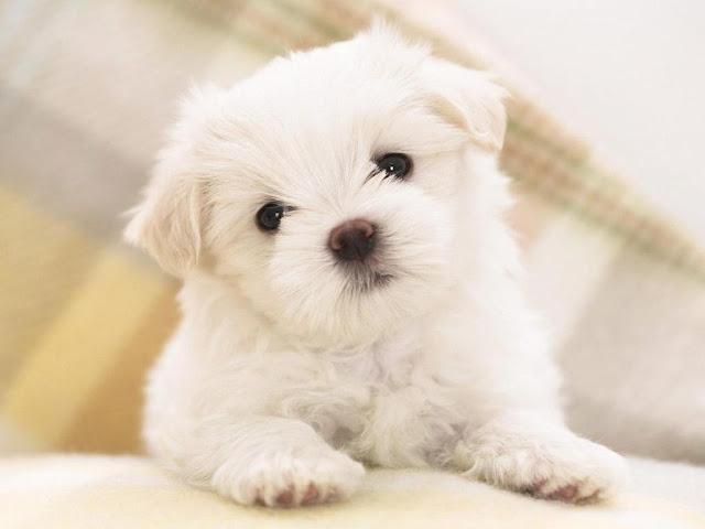 Top 100+ Hình ảnh chú chó dễ thương & Kute đáng yêu nhất năm