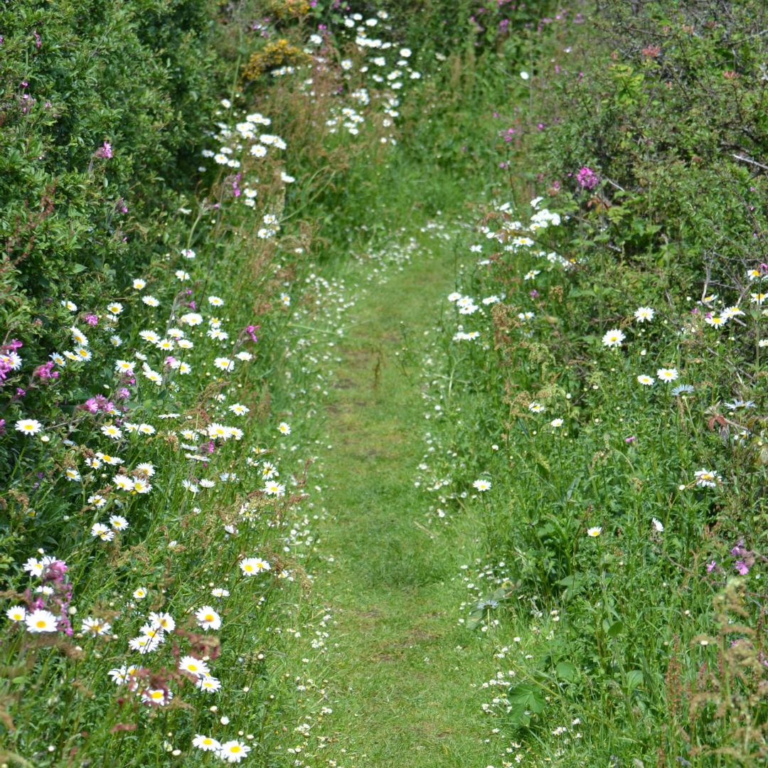 floral footpath
