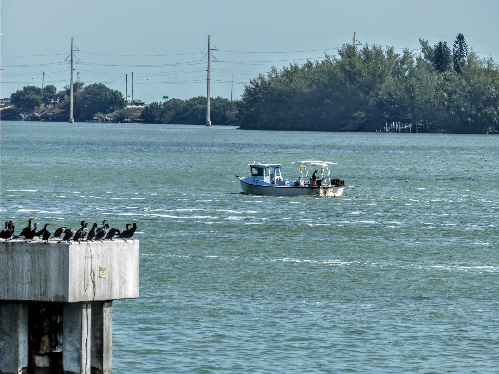 Key west diary fishing by bridge and boat for Key west fishing pier