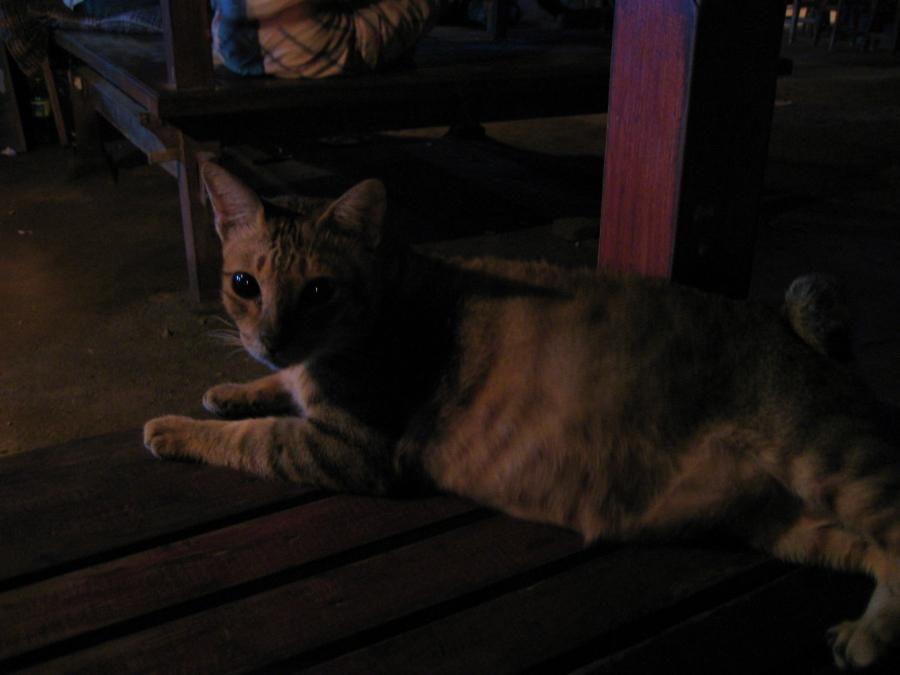 루디스 펍 고양이
