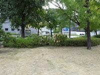 大阪城公園の紫陽花(8月中旬)