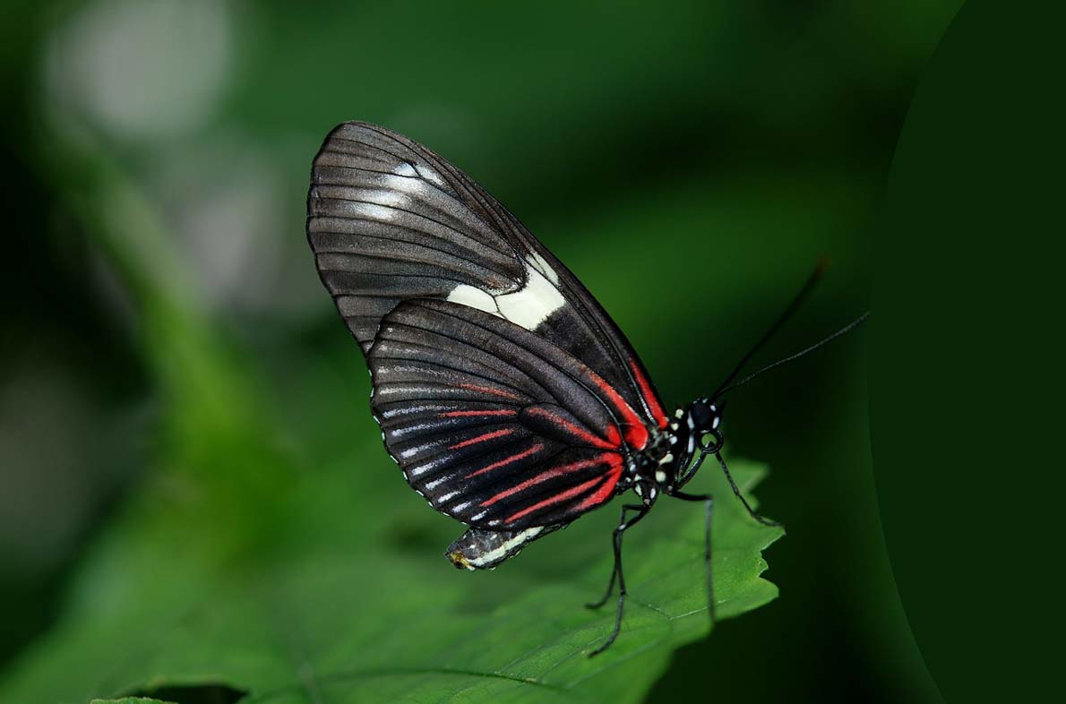 Nice Pictures of Beautiful Butterflies of Different Colors ...