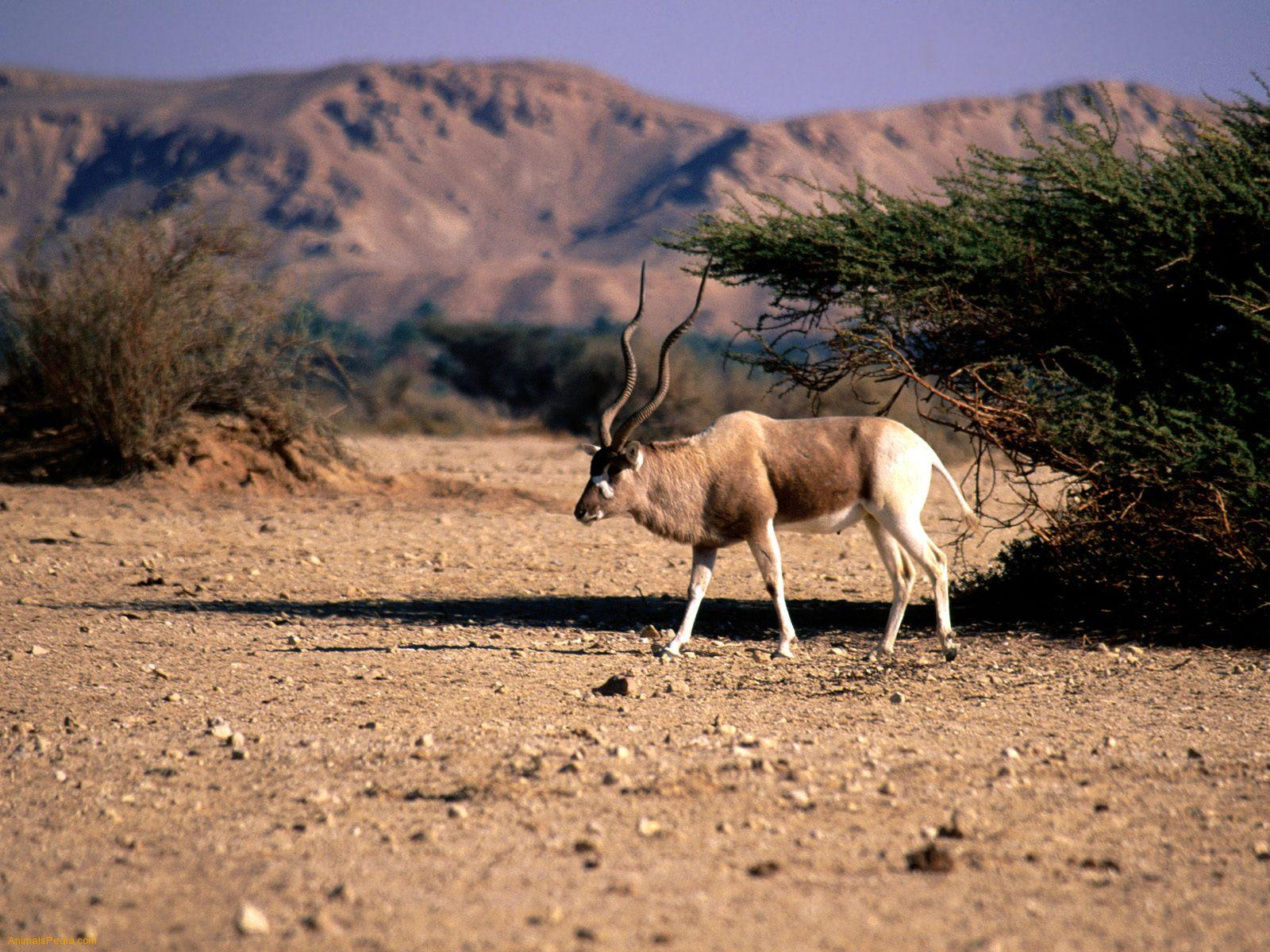 ... Animal list of Africa: Beautiful wildlife and dangerous wild animals