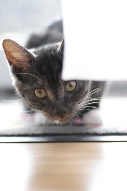 Das sollten man wissen, wenn man sich eine kleine Katze anschafft.