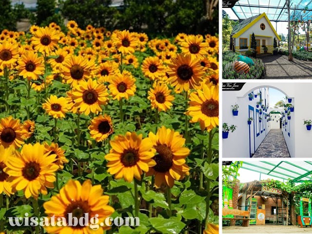 Sunflower Festival, Kebun Bunga Matahari Instagramable di Paris van Java Mall Bandung
