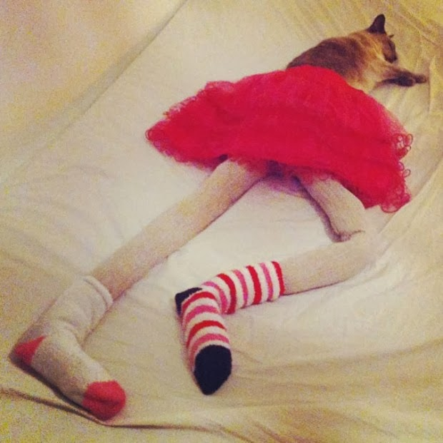 cats wearing tights1