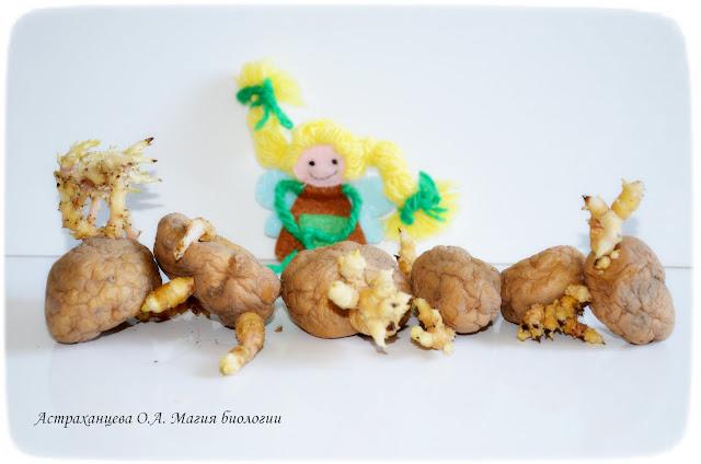 гусеница-из-картошки-вариационный ряд