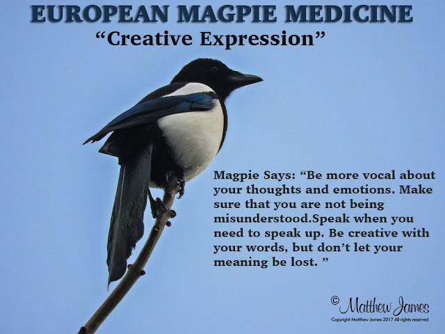 European Magpie Totem Meaning
