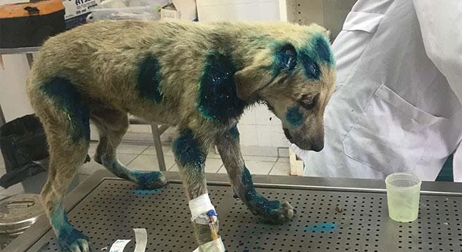 Diyarbakır Hazro'da yavru köpeğe işkence