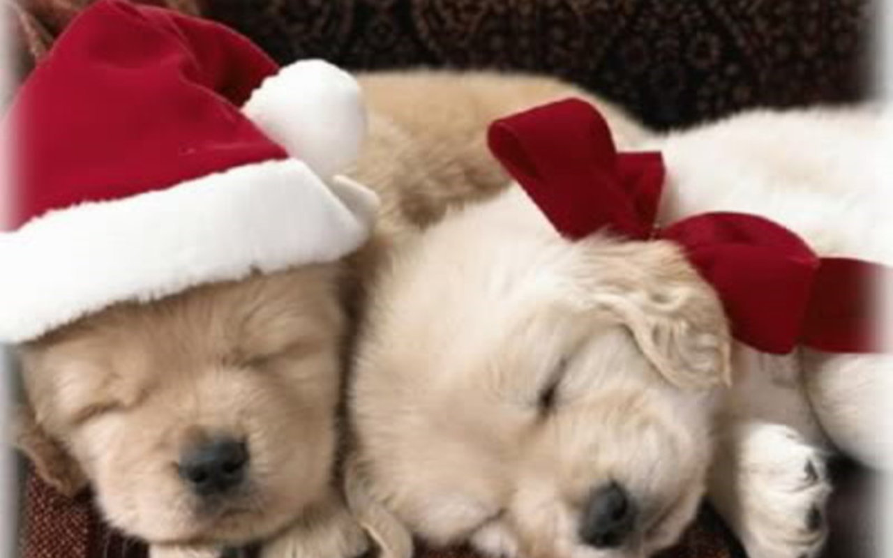 cute christmas puppies | Awesome Wallpapers