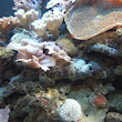 All About Aquarium Fish: Invertebrate-Compatible Marine Fish