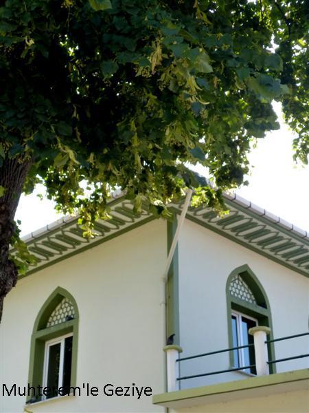 tilia tree