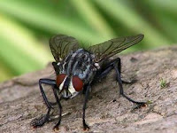 5 Cara Ampuh Mengusir Lalat Membandel Mudah dan Praktis