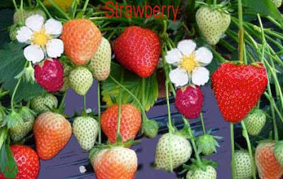 strawberry fruit; strawberry